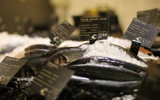 טבלת קלוריות לדגים